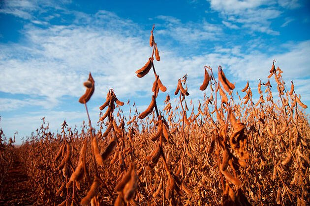 Dicas para colheita de soja na agricultura digital e moderna