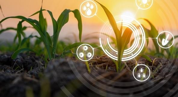 Milho e agricultura digital 6