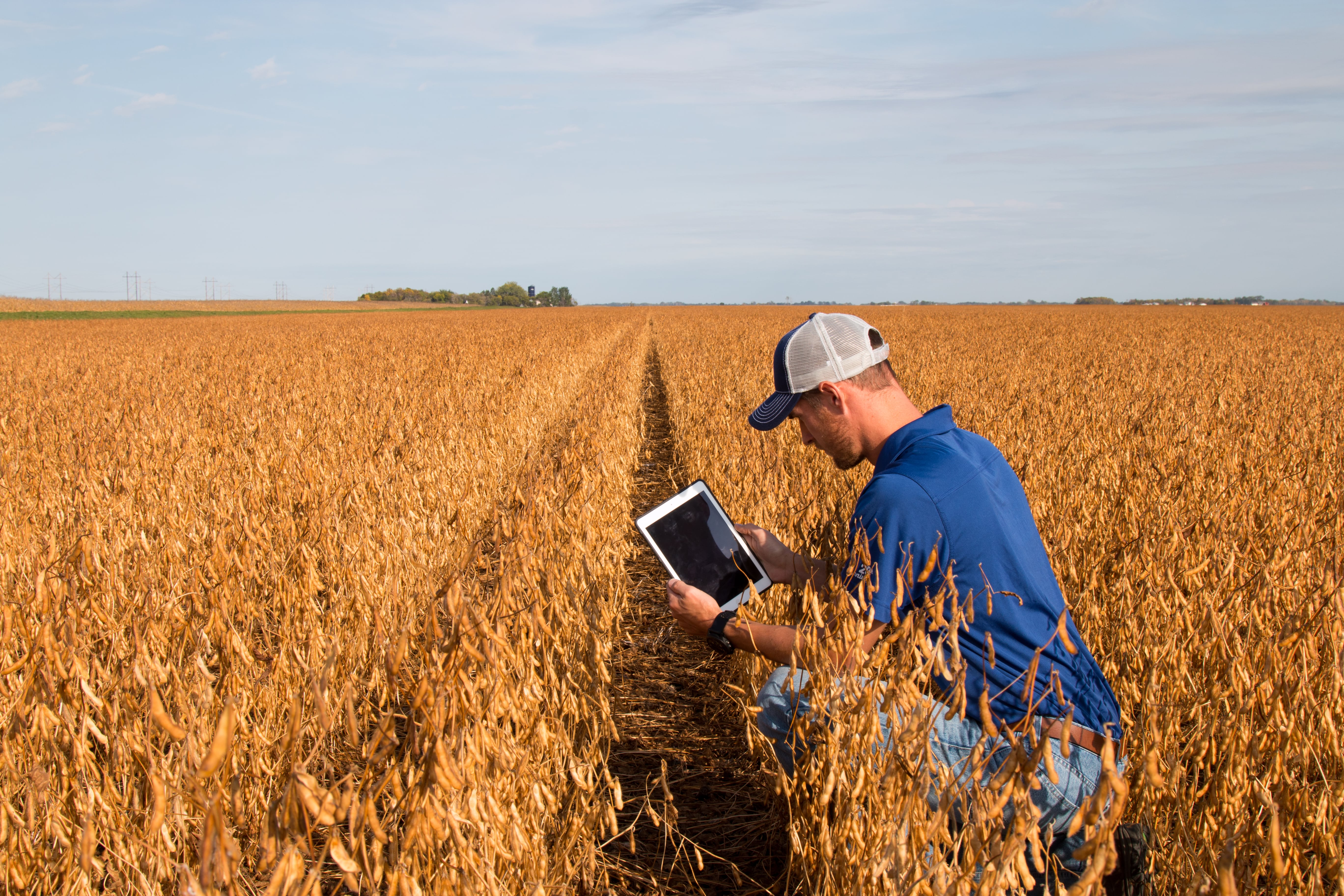 Saiba se a sua soja esta pronta para colher com software de agricultura digital