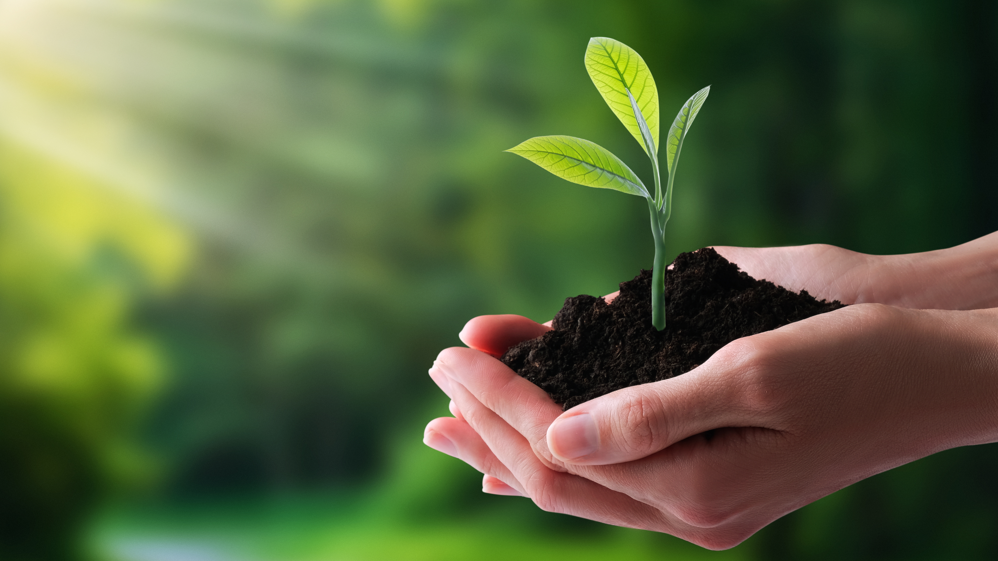 Sustentabilidade e tecnologia devem caminhar juntas no futuro da agricultura mundial