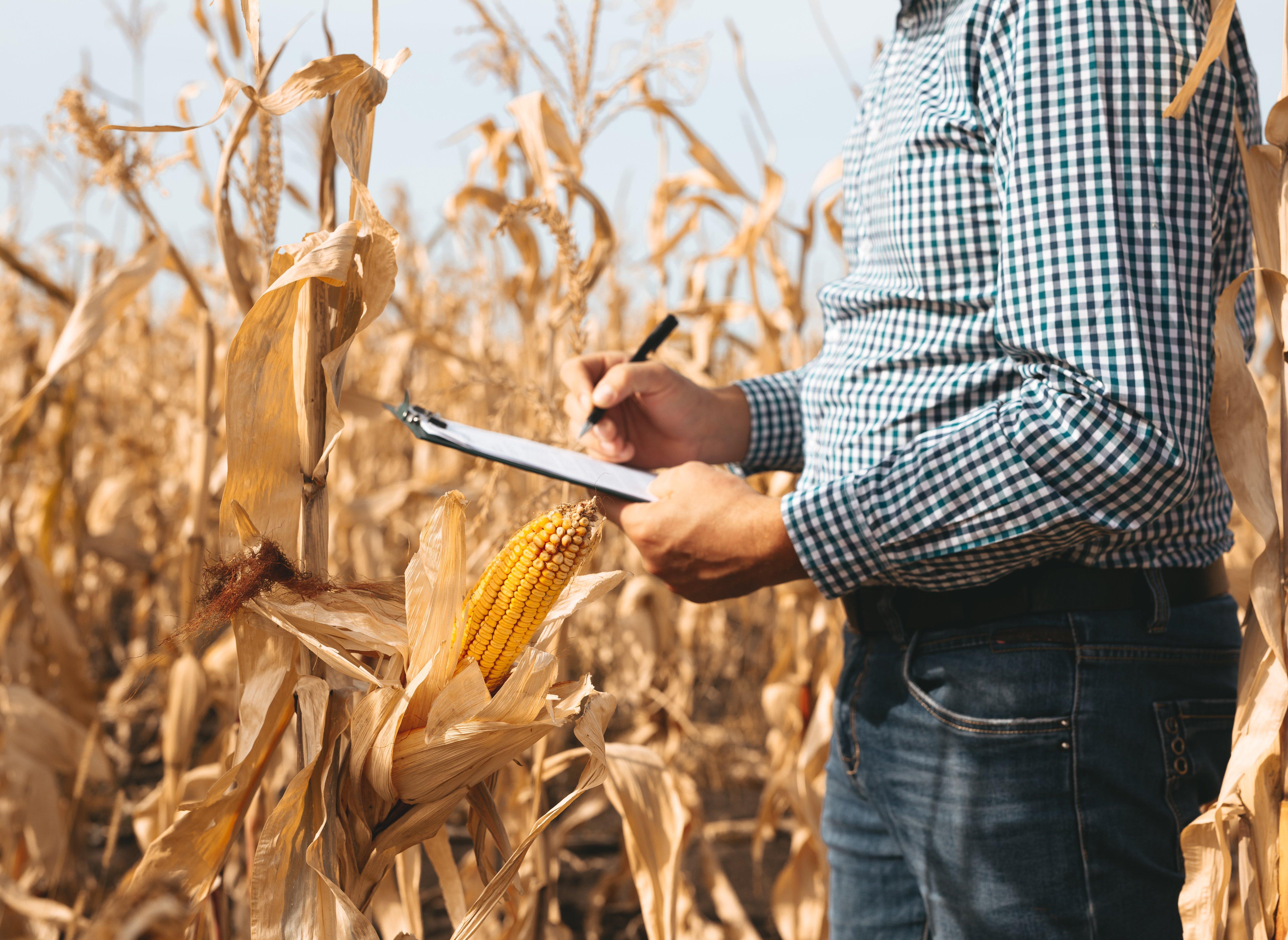 acompanhar desenvolvimento milho
