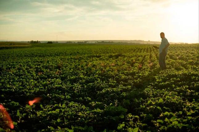 Agricultura digital na proteção de cultivos - Área de plantio.