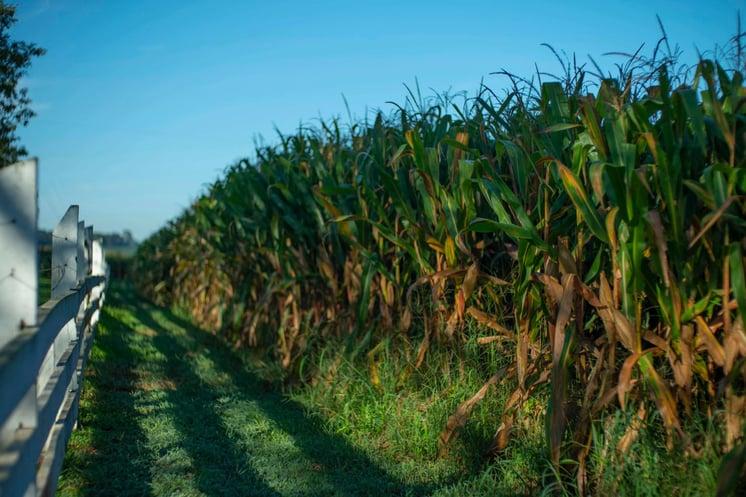 Aumentar produção de milho com Agricultura Digital