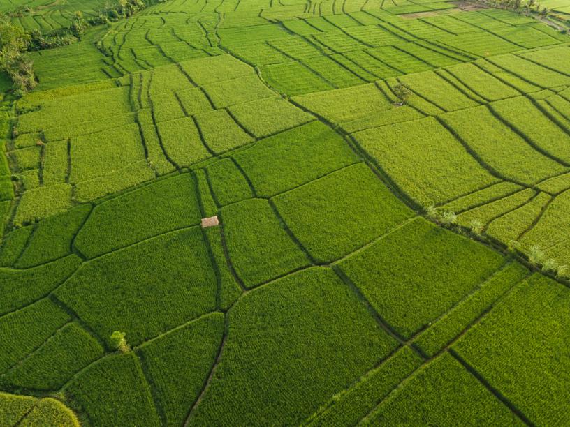 foto de satélite de um campo verde