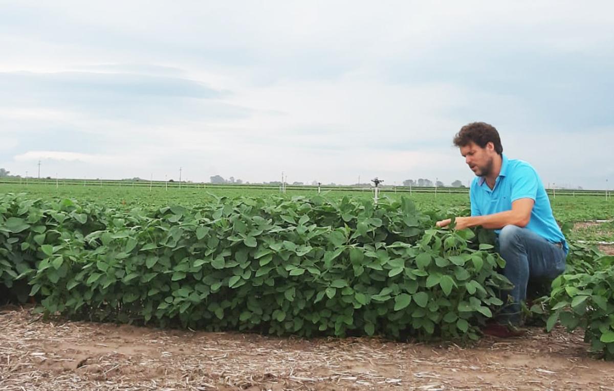 fernando solari - homem agachado lavoura soja