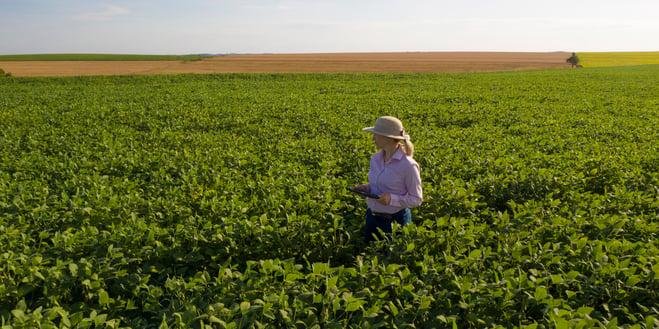 software de agricultura sendo utilizado no monitoramento
