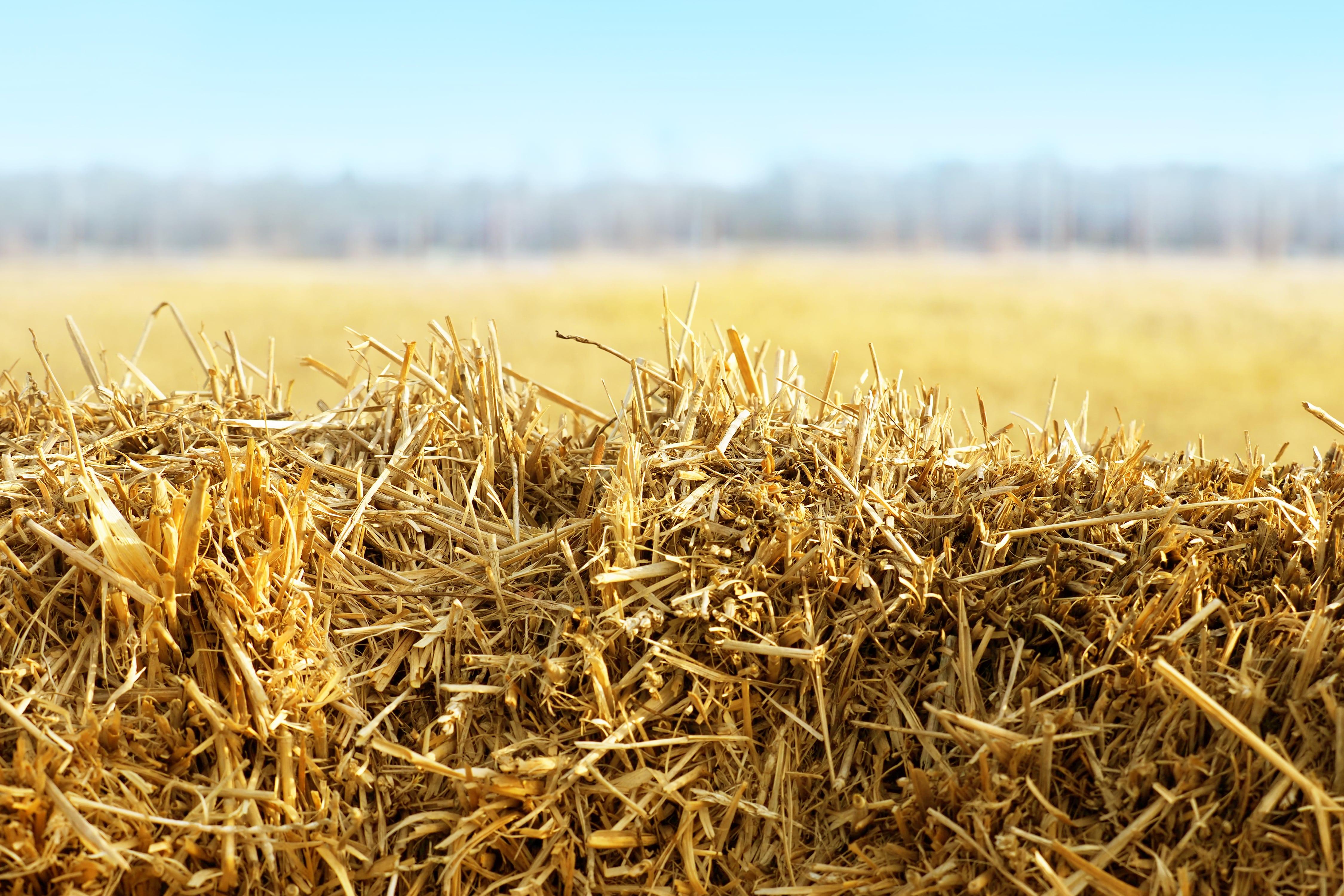 palhada de trigo ajuda a evitar a incidencia de plantas daninhas no solo