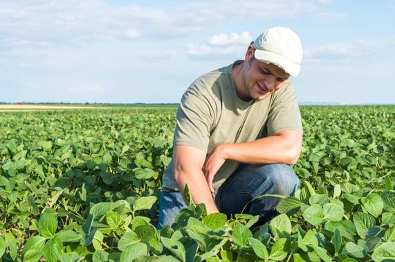 agricultor analisa safra da soja