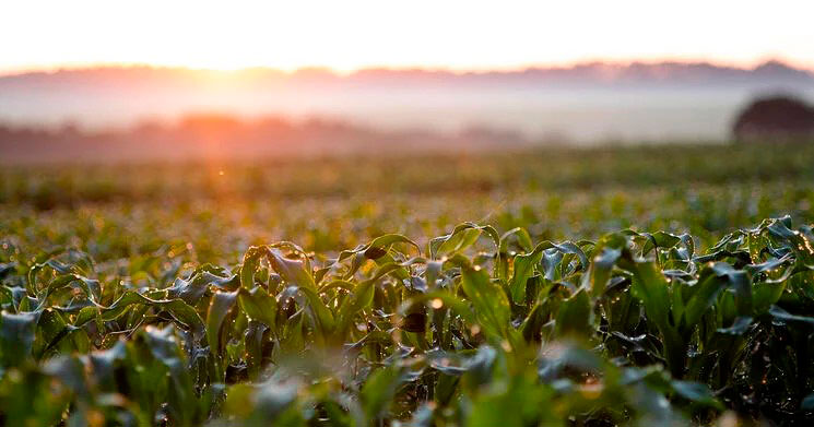 Produtividade do milho safrinha