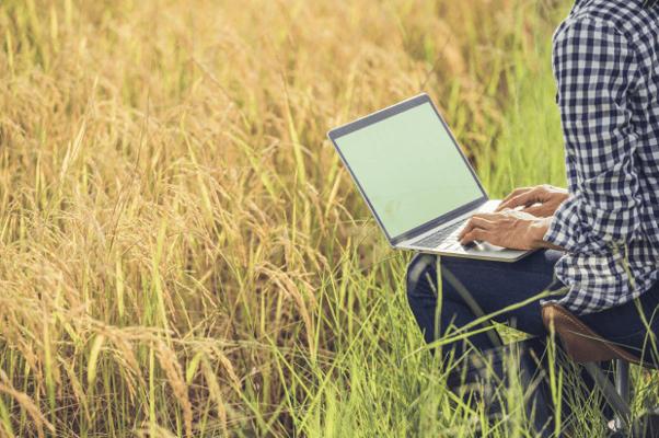 homem sentado mexendo no computador em um campo de arroz