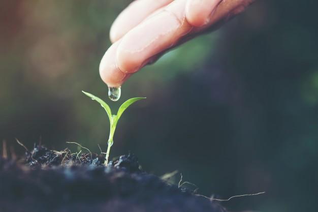 imagem aproximada de uma pessoa usando a mão para gotejar água sobre uma pequena planta no solo