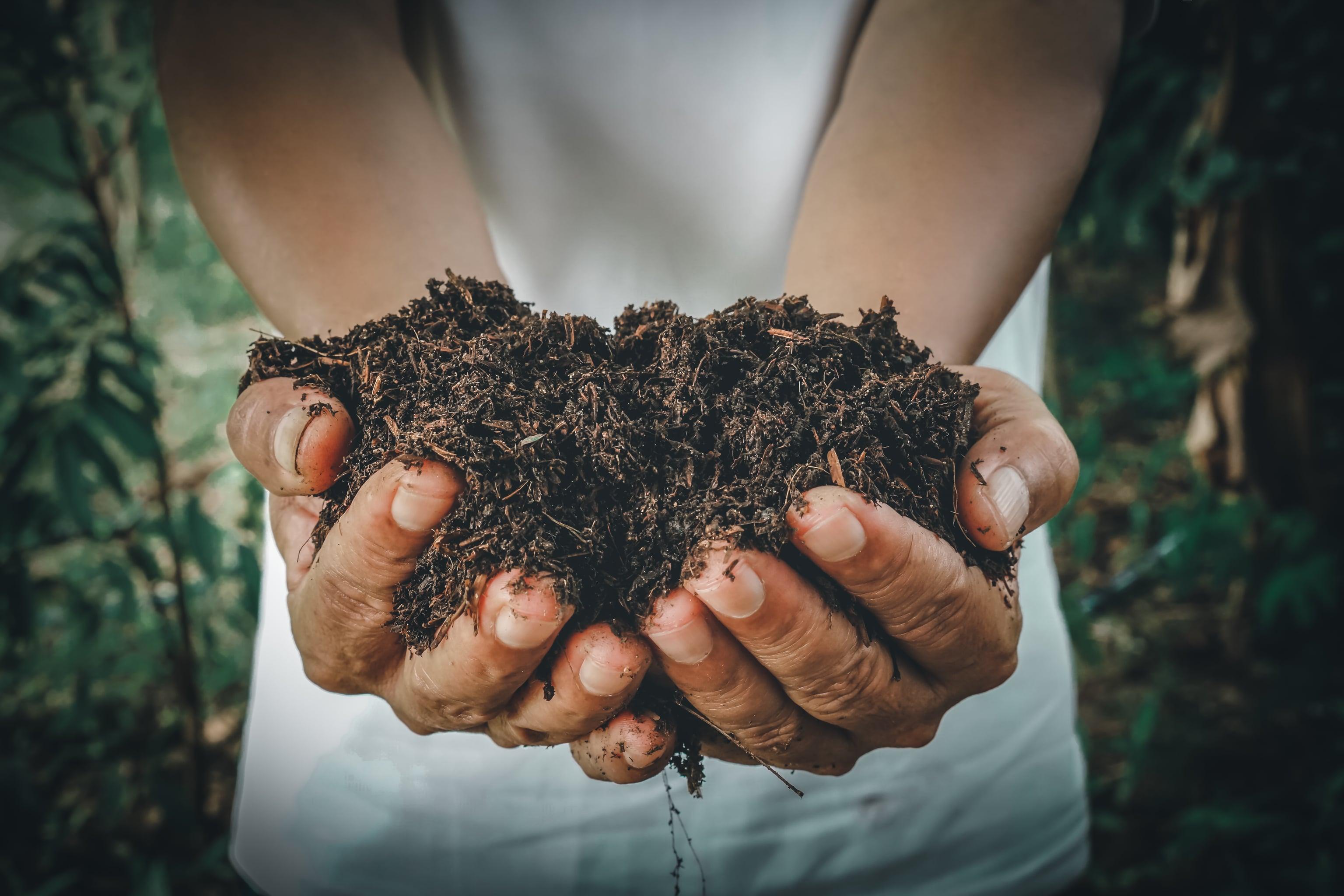utilizar insumos organicos e importante para o futuro da agricultura